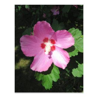 Nätt rosa ros av den Sharon blomman Brevhuvud