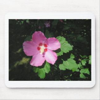 Nätt rosa ros av den Sharon blomman Mus Matta