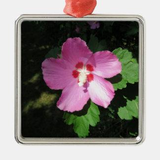 Nätt rosa ros av den Sharon blomman Silverfärgad Fyrkantigt Julgransprydnad