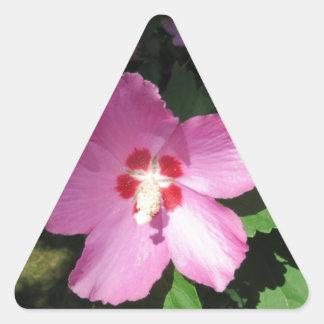 Nätt rosa ros av den Sharon blomman Triangelformat Klistermärke
