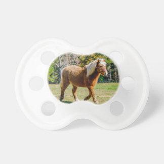 Nätt Shetland ponny Napp