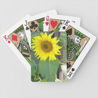 Nätt solros som leker kort spelkort