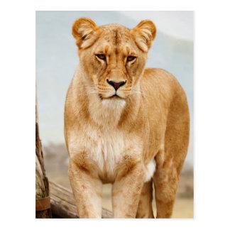 nätt stor katt vykort