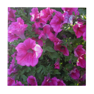 Natur flora, rosablomma kakelplatta