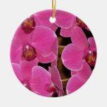 Natur för öde för trädgård för Orchidblommarblommi Julgransdekoration