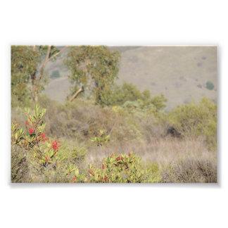 Natur Fotografiskt Tryck