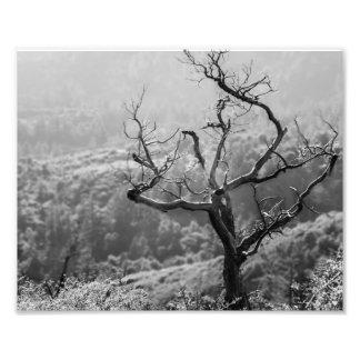 Natur Fototryck