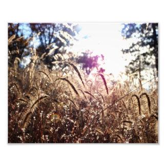 Natur i solen fototryck