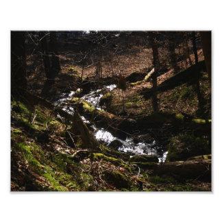 Naturer strömmer det fotografiska trycket 10x8 konstfoto