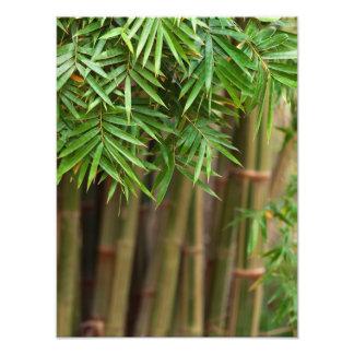 Naturlig skräddarsy mall för bambuZen bakgrund Fotokonst