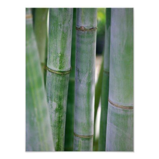 Naturlig skräddarsy mall för bambuZen bakgrund Fotografiskt Tryck