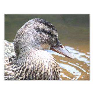 Naturliga Duckface Fototryck
