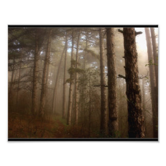Naturliga skogträd landskap konstfoto
