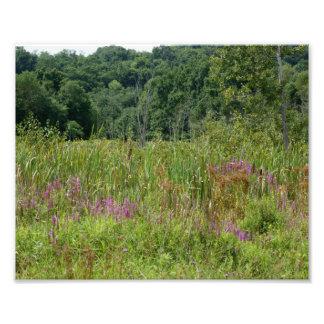 Naturliga vildblommar fotografiskt tryck 10 x 8