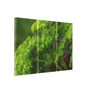 Naturligt grönt Parsleyörtfoto för kök Canvastryck