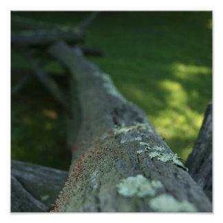 Naturligt staketfoto fotografier