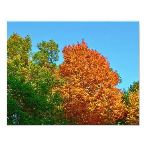 Naturs samling av härliga färger fotokonst