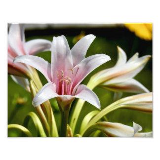 Naturs skönhet 1 - fotosamling fototryck