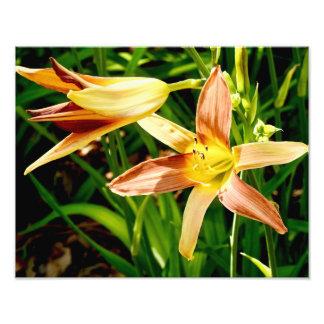Naturs skönhet 3 - fotosamling fototryck