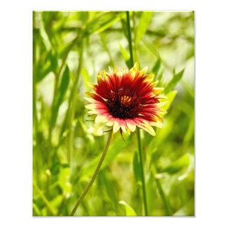 Naturs skönhet 5 - fotosamling fototryck