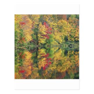 Naturträdhöst färgrik reflexion för sjö vykort