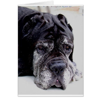 neapolitan mastiff.png hälsningskort