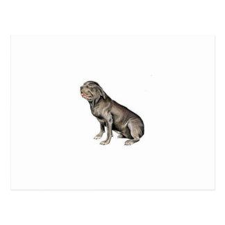 Neapolitan Mastiff Vykort
