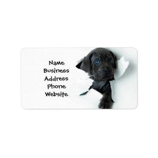 Neapolitan Mastiffsvarthund som igenom river Adressetikett