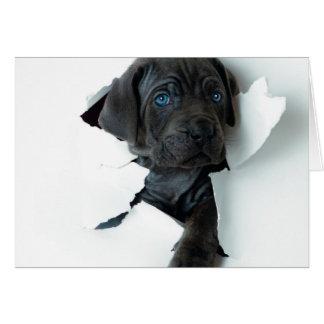 Neapolitan Mastiffsvarthund som igenom river Hälsningskort