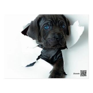 Neapolitan Mastiffsvarthund som igenom river Vykort