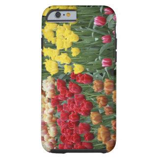 Nederländerna Keukenhoff trädgårdar, tulips. Tough iPhone 6 Skal