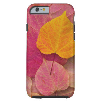 Nedgångfärg på skogpansyen stupade Redbud Tough iPhone 6 Skal
