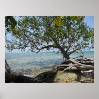 Negril strand vid Mangroveträdkanvastrycket Affischer