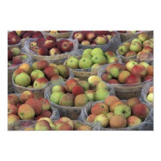 New York statliga Macintoshäpplen i basket Fototryck