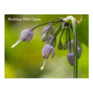 Nicka vykortet för vildblomma för vildlöknamn vykort