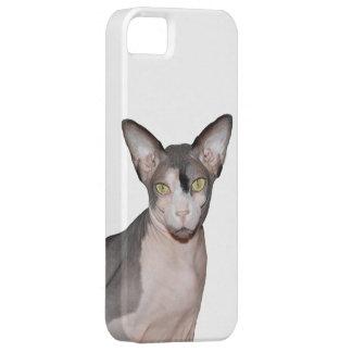 Ninja för katt för fodral | Sphynx för iPhone 5 iPhone 5 Fodral
