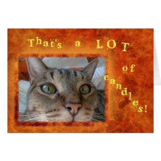 Nomaden katten beskådar grattis på födelsedagen hälsningskort