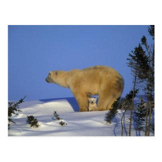 Nordamerika Kanada, Manitoba, Churchill. 10 Vykort