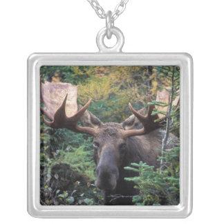Nordamerika Kanada, Nova Scotia, uddBreton Silverpläterat Halsband