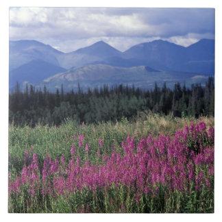 Nordamerika Kanada, Yukon. Fireweedblom Kakelplatta