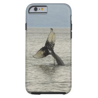 Nordamerika USA, AK, inre passage. Puckelrygg Tough iPhone 6 Case