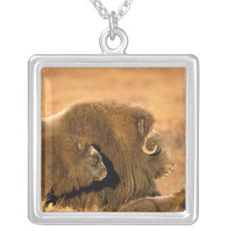 Nordamerika USA, Alaska, arktisk medborgare Silverpläterat Halsband
