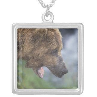Nordamerika USA, Alaska, Katmai NP, bäckar Halsband Med Fyrkantigt Hängsmycke