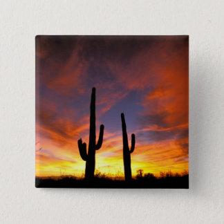 Nordamerika USA, Arizona, Sonoran Desert. Standard Kanpp Fyrkantig 5.1 Cm