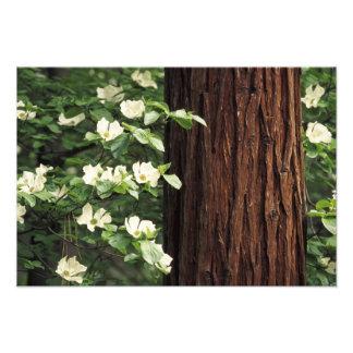 Nordamerika USA, Kalifornien, Yosemite Fototryck
