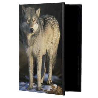 Nordamerika USA, Minnesota. Varg (Canis Fodral För iPad Air