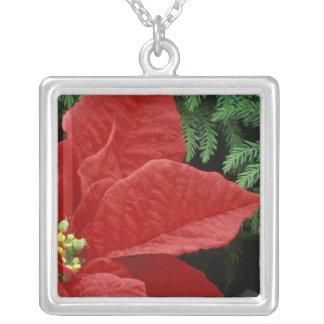 Nordamerika USA, WA, Woodinville som är röd Halsband Med Fyrkantigt Hängsmycke