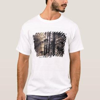 Nordamerika USA, Washington, OS NF, T Shirt