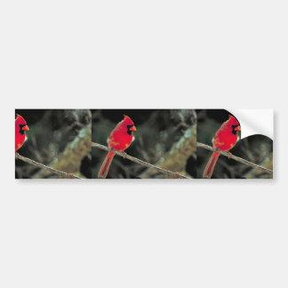 Nordlig kardinal bildekal