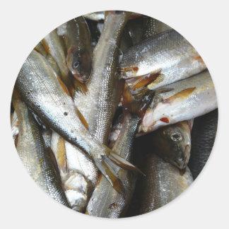 Nordlig Pike liten fiskfisk Runt Klistermärke